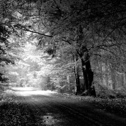 Elskede trær